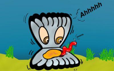 """Se trovate un """"vermetto"""" biancastro nei molluschi bivalvi non è un vermetto!"""